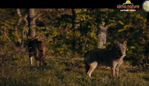 Una stodia di lupi - Andrea Dalpian (film)